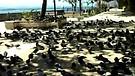 Parque Las Palomas